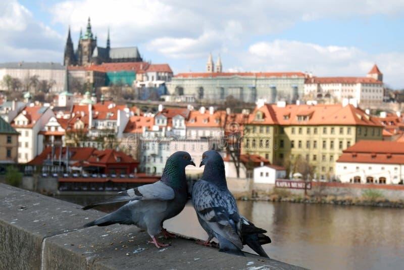 Άποψη κάστρων της Πράγας από τη γέφυρα του Charles στοκ φωτογραφία