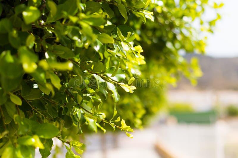 Άποψη κινηματογραφήσεων σε πρώτο πλάνο του πράσινου φύλλου φύσης στο θολωμένο υπόβαθρο οδών με το διάστημα αντιγράφων, που χρησιμ στοκ εικόνες