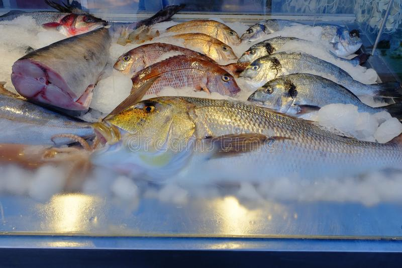 Άποψη κινηματογραφήσεων σε πρώτο πλάνο των φρέσκων και ακατέργαστων ψαριών στοκ φωτογραφία με δικαίωμα ελεύθερης χρήσης