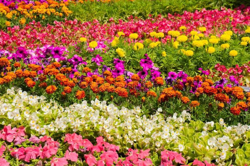Άποψη κινηματογραφήσεων σε πρώτο πλάνο του κρεβατιού λουλουδιών στοκ εικόνες