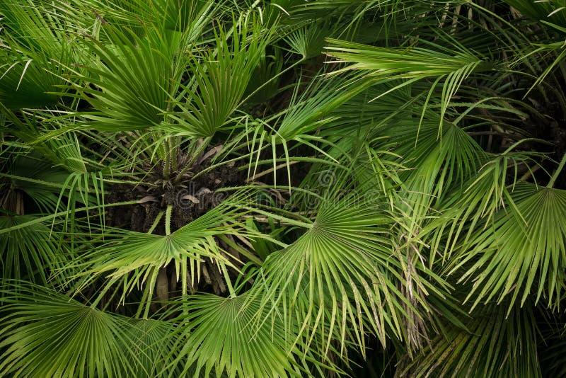 Άποψη κινηματογραφήσεων σε πρώτο πλάνο του πράσινου φύλλου φοινίκων στοκ εικόνες