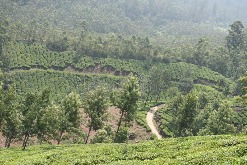 Άποψη κτημάτων τσαγιού Munnar, Κεράλα στοκ φωτογραφίες
