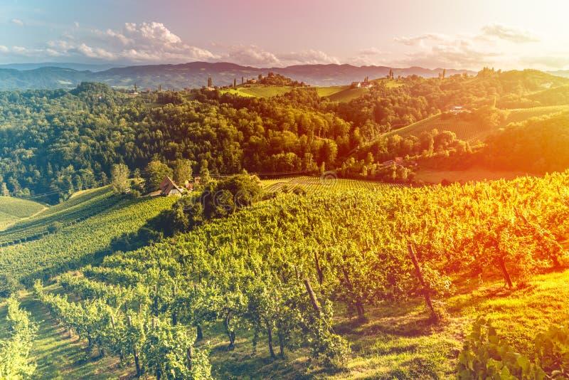Άποψη λόφων και βουνών σταφυλιών από την οδό κρασιού στο Styria, την Αυστρία & x28  Sulztal Weinstrasse & x29  το καλοκαίρι Η ελα στοκ φωτογραφία