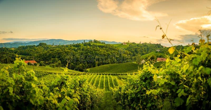 Άποψη λόφων και βουνών σταφυλιών από την οδό κρασιού στο Styria, την Αυστρία & x28  Sulztal Weinstrasse & x29  το καλοκαίρι στοκ φωτογραφία