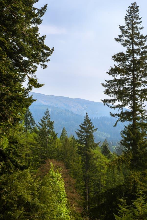 Άποψη μέσω του δάσους στους λόφους σε Argyll, Σκωτία στοκ εικόνα με δικαίωμα ελεύθερης χρήσης