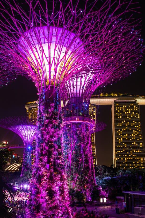 Άποψη νύχτας του φωτισμένου άλσους Supertree στοκ φωτογραφία με δικαίωμα ελεύθερης χρήσης