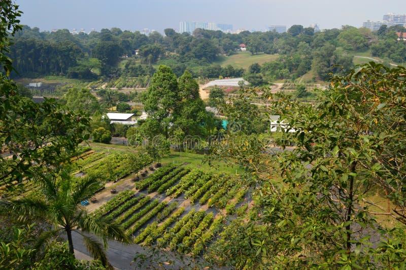 Άποψη πέρα από τους κήπους αγοράς και την πόλη από το νότιο περίπατο κορυφογραμμών στοκ φωτογραφίες με δικαίωμα ελεύθερης χρήσης