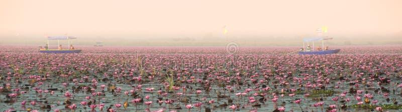Άποψη πανοράματος του όμορφου ρόδινου κρίνου νερού στη λίμνη στην Ταϊλάνδη στοκ εικόνες
