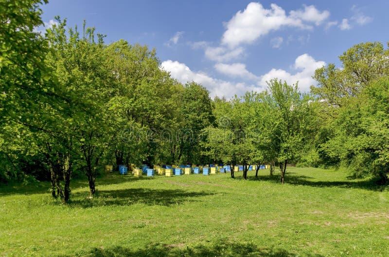 Άποψη προς το μελισσουργείο με την κυψέλη στον τομέα στο δάσος στοκ εικόνα
