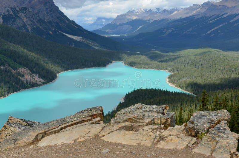 Άποψη σκιούρων λιμνών Peyto στοκ εικόνες με δικαίωμα ελεύθερης χρήσης