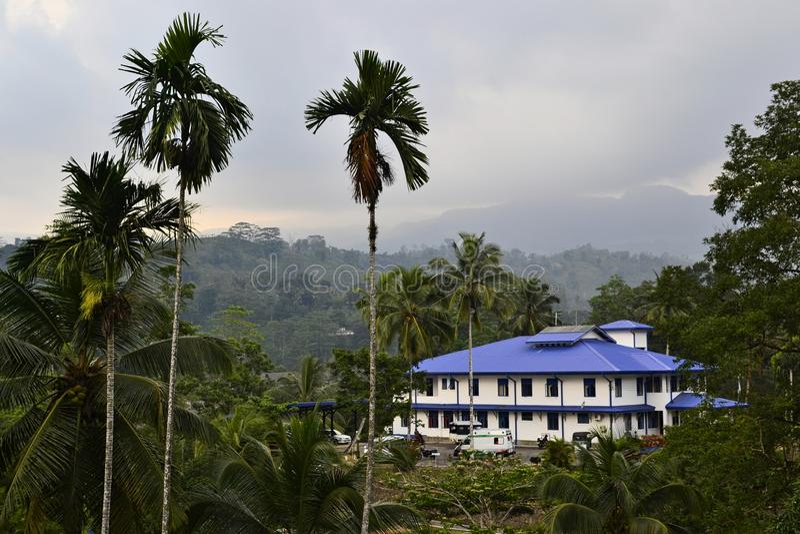 Άποψη στους φοίνικες και το άσπρο κτήριο με την μπλε στέγη σε ένα τροπικό δάσος στοκ εικόνα με δικαίωμα ελεύθερης χρήσης