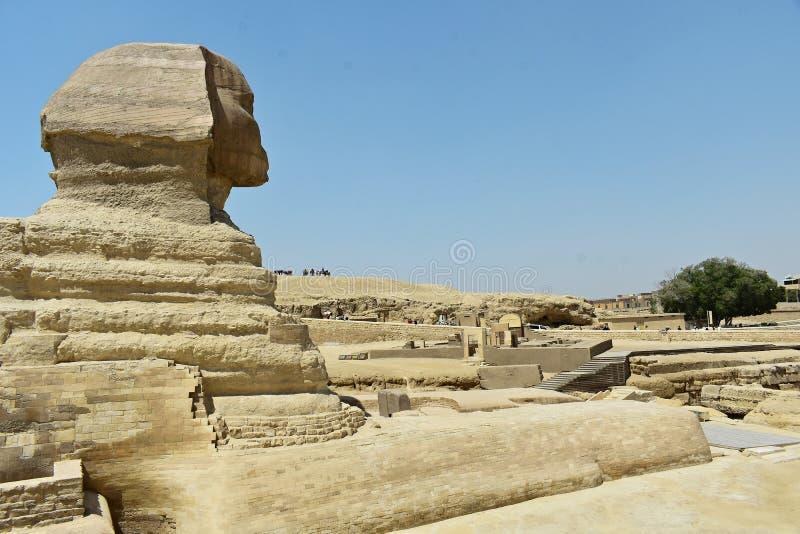 Άποψη σχεδιαγράμματος του μεγάλου Sphinx Giza, Κάιρο, Αίγυπτος στοκ φωτογραφίες