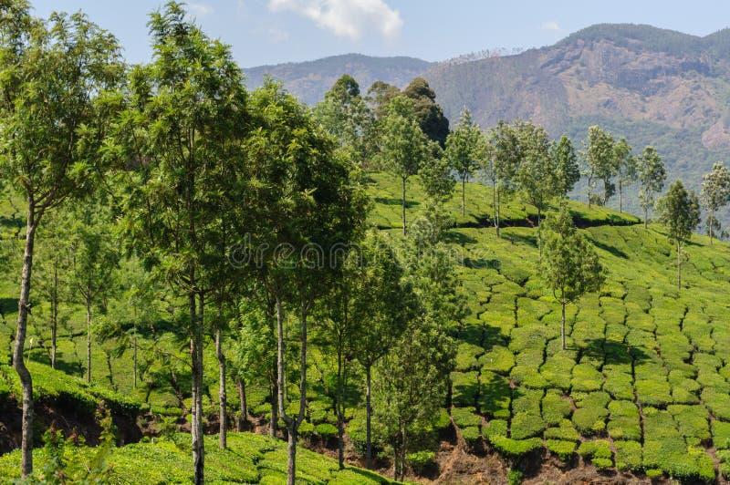 Άποψη σχετικά με τις φυτείες τσαγιού, κοντά σε Munnar στοκ εικόνες