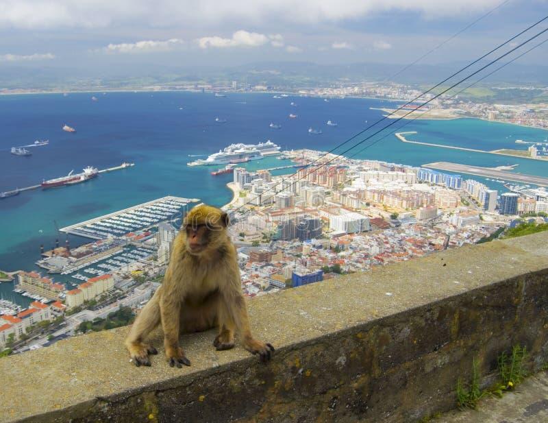 Άποψη σχετικά με το βόρειο μέρος του Γιβραλτάρ με το macaque στοκ φωτογραφίες