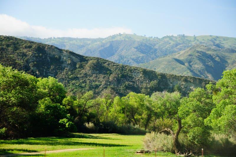 Άποψη της βουνοπλαγιάς σε μια βόρεια Καλιφόρνια Ο ήλιος χρωμάτισε τα στρογγυλά διαμορφωμένα δέντρα με τις καταπληκτικές όμορφες α στοκ εικόνες με δικαίωμα ελεύθερης χρήσης