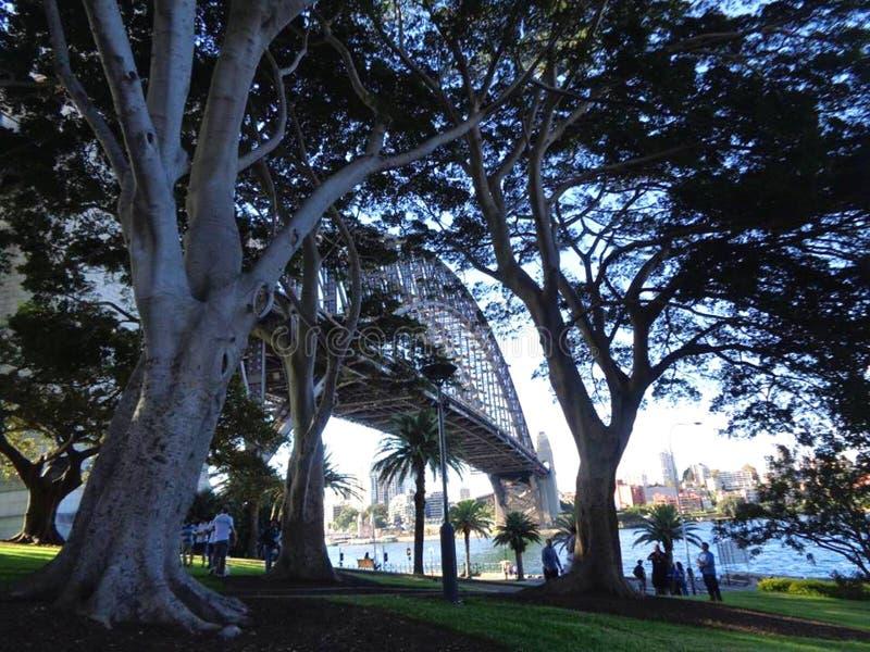Άποψη της λιμενικής γέφυρας του Σίδνεϊ μέσω των δέντρων στοκ εικόνες