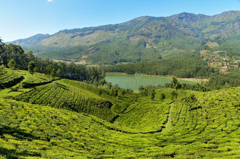 Άποψη της κοιλάδας φυτειών τσαγιού και του φράγματος Madupetty σε Munnar στοκ εικόνα