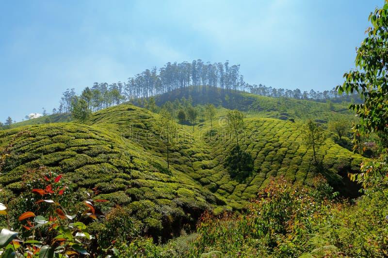 Άποψη της κοιλάδας φυτειών τσαγιού σε Munnar στοκ φωτογραφία