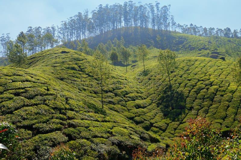 Άποψη της κοιλάδας φυτειών τσαγιού σε Munnar στοκ φωτογραφίες