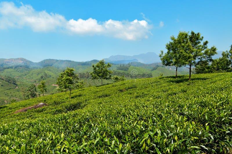 Άποψη της κοιλάδας φυτειών τσαγιού σε Munnar στοκ εικόνα