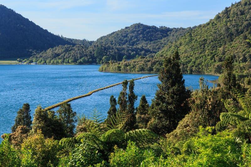 Άποψη της λίμνης Tikitapu, Νέα Ζηλανδία, από έναν κοντινό λόφο στοκ φωτογραφία με δικαίωμα ελεύθερης χρήσης