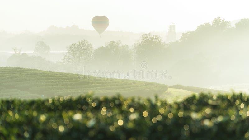 Άποψη της όμορφης φυτείας τσαγιού με ένα μπαλόνι ζεστού αέρα στο χρόνο πρωινού σε Chiangrai, Ταϊλάνδη στοκ φωτογραφία