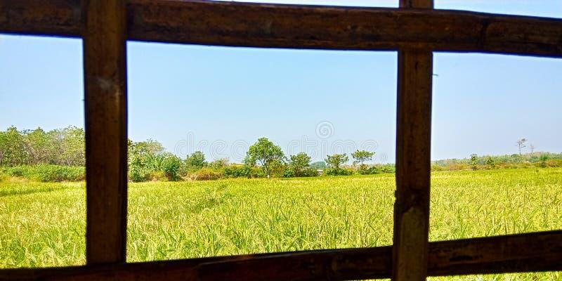 Άποψη τομέων ρυζιού στοκ φωτογραφία με δικαίωμα ελεύθερης χρήσης