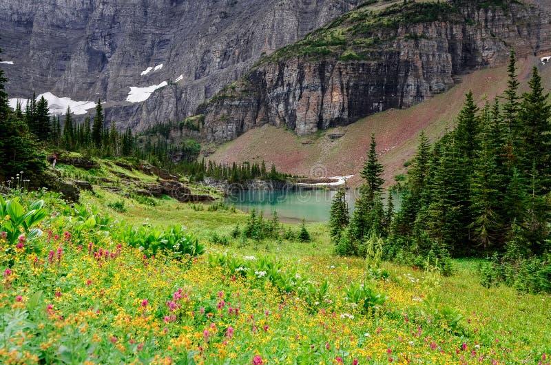 Άποψη τοπίων του αλπικού λιβαδιού στα βουνά του NP παγετώνων στοκ φωτογραφία με δικαίωμα ελεύθερης χρήσης