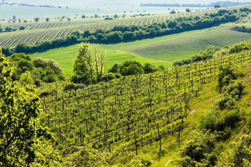 άποψη του αμπελώνα Jecmeniste, περιφέρεια Znojmo, Τσεχική Δημοκρατία στοκ φωτογραφία με δικαίωμα ελεύθερης χρήσης