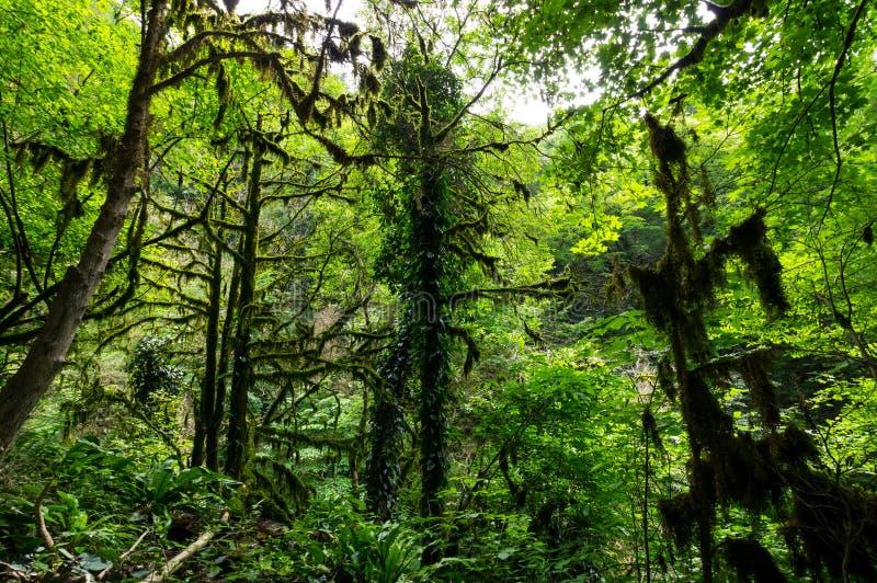 Άποψη του δάσους στοκ εικόνα με δικαίωμα ελεύθερης χρήσης