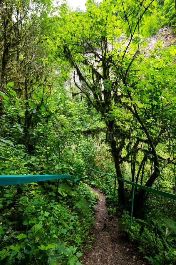 Άποψη του δάσους στοκ εικόνες