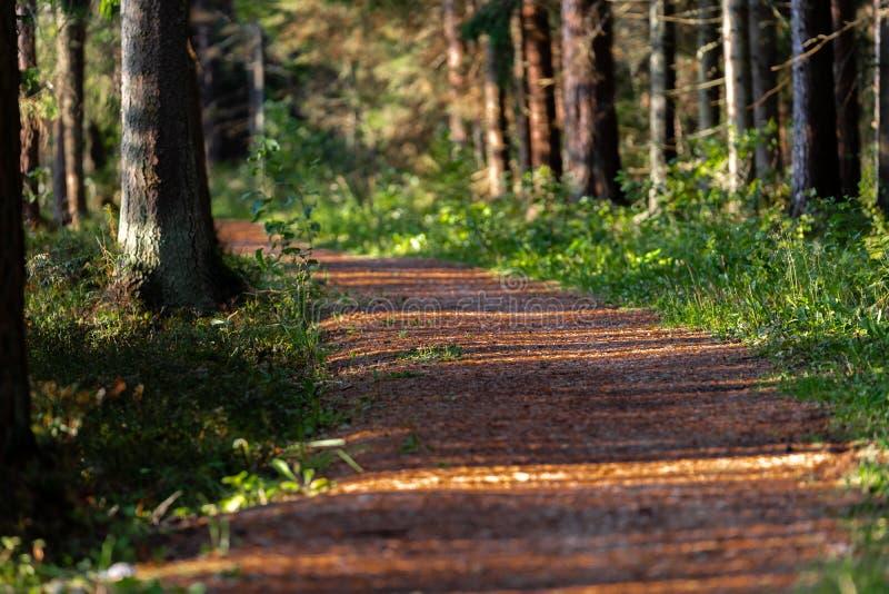 Άποψη του δασικού δρόμου, τίτλος βαθύτερος στα ξύλα στοκ εικόνες