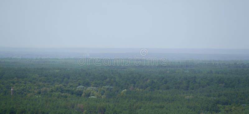 άποψη του δασικού τοπίου στους γαλαζοπράσινους τόνους και την ελαφριά ομίχλη στοκ φωτογραφία