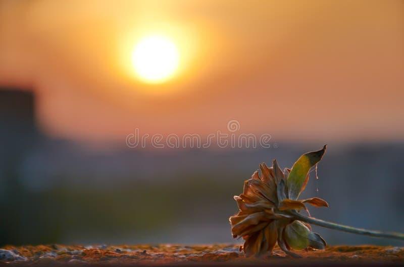 Άποψη του ηλιοβασιλέματος και του λουλουδιού στοκ εικόνες