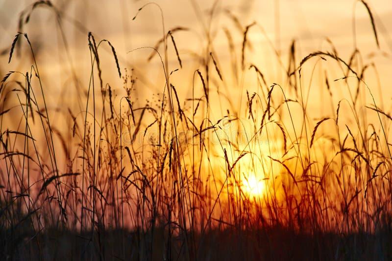 Άποψη του ηλιοβασιλέματος μέσω της χλόης στοκ εικόνες