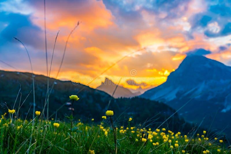 Άποψη του κίτρινου τομέα λουλουδιών με το όμορφο βράδυ ligh στοκ εικόνες με δικαίωμα ελεύθερης χρήσης