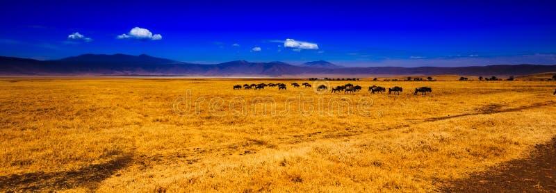 Άποψη του κρατήρα Ngorongoro στοκ εικόνα