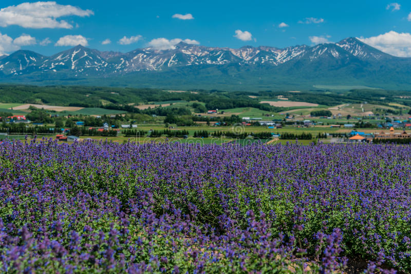 Άποψη του λογικού τομέα λιβαδιών σε Flowerland, Kamifurano, Hokkaido, J στοκ φωτογραφία