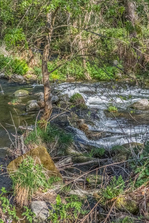 Άποψη του ποταμού DÃo, με τα δέντρα, τους βράχους και τη βλάστηση στις τράπεζες, τις αντανακλάσεις στο νερό και τα φωτεινά χρώμα στοκ φωτογραφία με δικαίωμα ελεύθερης χρήσης