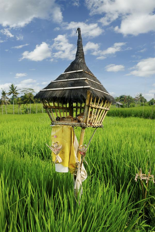 Άποψη του πράσινου τομέα ρυζιού στο πεζούλι στο Μπαλί με τον από το Μπαλί ναό - Ινδονησία στοκ φωτογραφίες