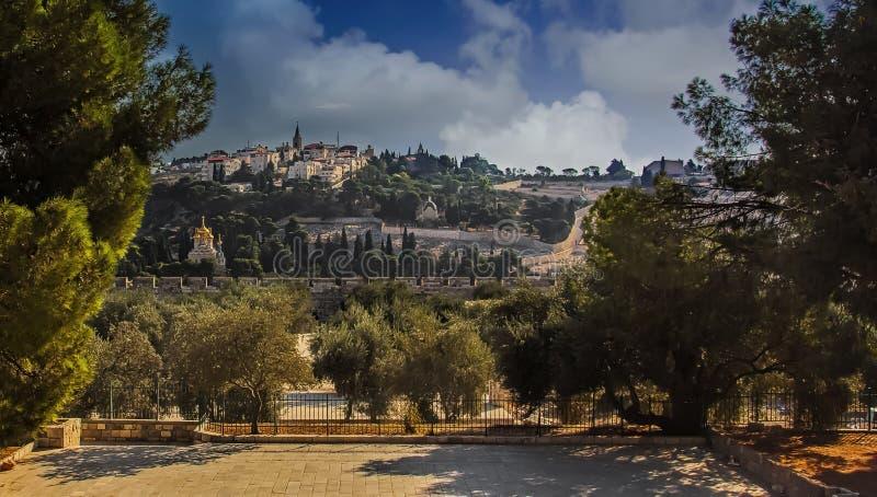 Άποψη του υποστηρίγματος των ελιών στην Ιερουσαλήμ στοκ εικόνες