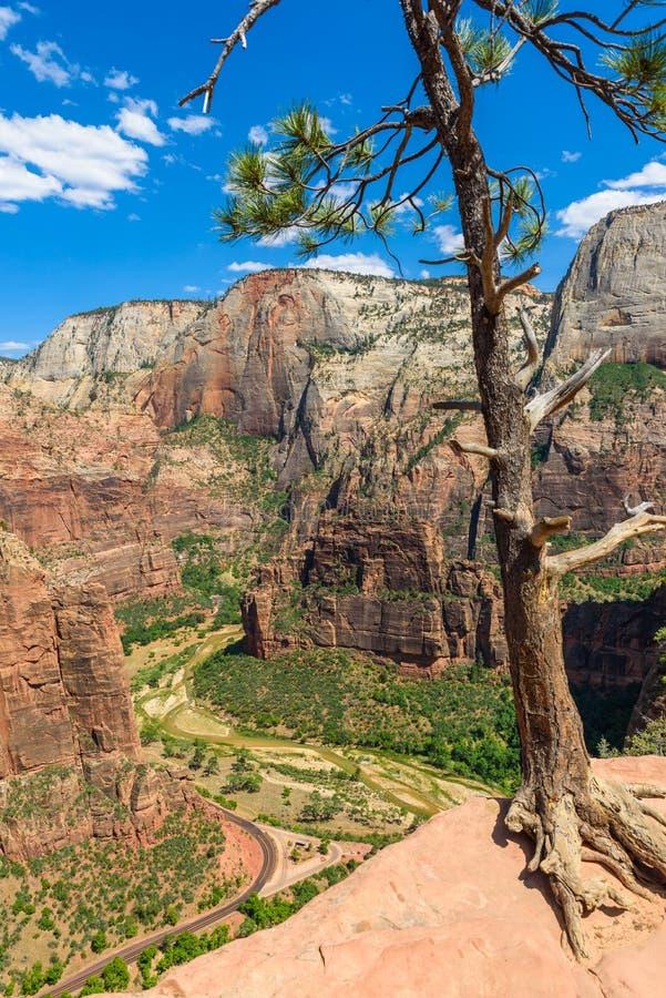 Άποψη του φαραγγιού Zion και του ποταμού της Virgin, όμορφο τοπίο στο εθνικό πάρκο Zion κατά μήκος του προσγειωμένος ίχνους του α στοκ φωτογραφίες με δικαίωμα ελεύθερης χρήσης