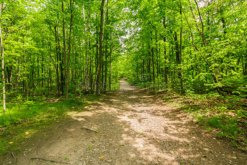 άποψη του φυσικού φρέσκου πράσινου δάσους με το ίχνος, πορεία, τοπίο στους λόφους του Οντάριο Halton στοκ εικόνες