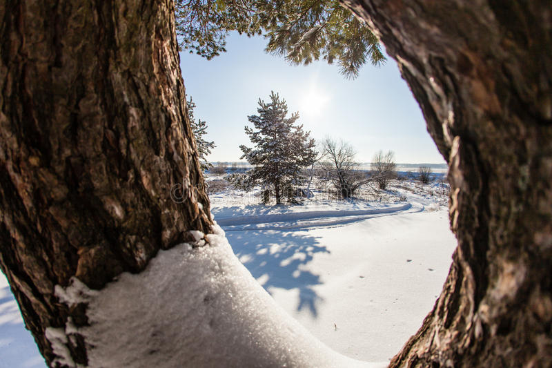 Άποψη του χειμερινού δάσους μέσω του καρφωμένου με τη διχάλα κορμού ενός πεύκου στοκ φωτογραφία