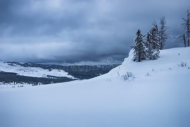 Άποψη του χειμερινού δάσους στοκ εικόνα