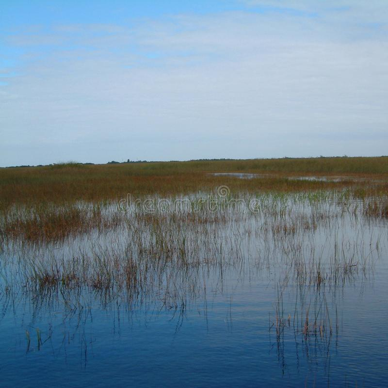 Άποψη του Everglades στοκ φωτογραφία