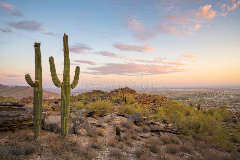 Άποψη του Phoenix με τον κάκτο Saguaro στοκ φωτογραφία με δικαίωμα ελεύθερης χρήσης
