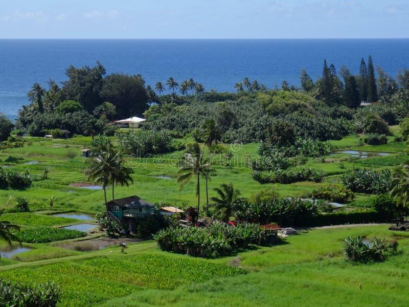 Άποψη των τομέων αγροκτημάτων σε Maui στοκ φωτογραφίες