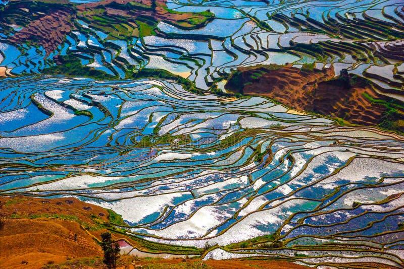 Άποψη των τομέων ρυζιού στην ηλιόλουστη ημέρα εποχής πλημμυρών στοκ εικόνα με δικαίωμα ελεύθερης χρήσης