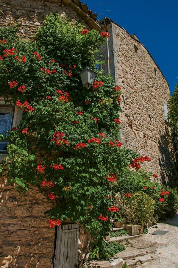 Άποψη των χαρακτηριστικών σπιτιών πετρών με τον ηλιόλουστους μπλε ουρανό και τα λουλούδια, σε μια αλέα Ménerbes στοκ εικόνα